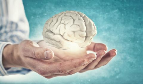 Photo of hands holding brain.