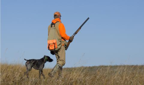 Hunter and his dog out pheasant hunting.