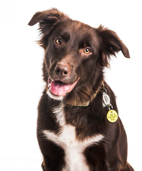 Trek is a Border Collie and Lab mix